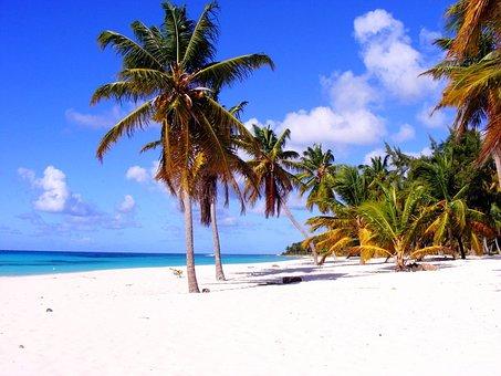 Palm, Beach, Dominika