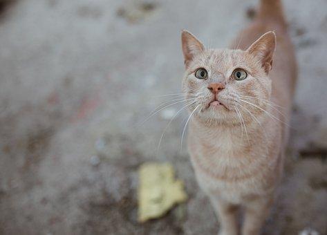 Cat, Animal, Cute, Park, Sweet, Animal Portrait, Pet