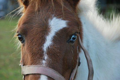 Animals, Horse, Pony, View, Fish Eye, Pferdeportrait