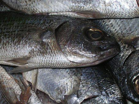 Fish, Trout, Catch, Bazaar, Dead, Eating, Scales