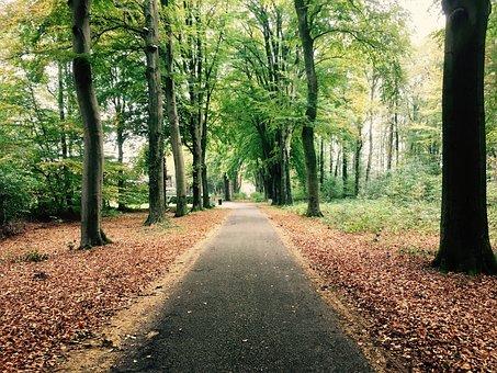 Forest, Path, Autumn, Silent, Leave, Walk