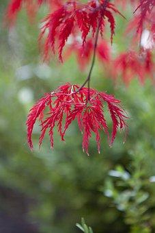 Autumn, Autumn Leaves, Maple, Landscape, The Leaves