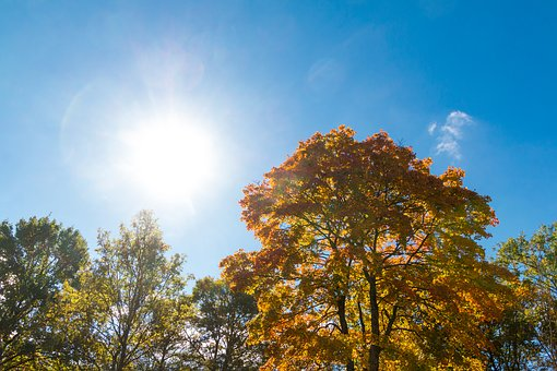 Colored Trees, Autumn, In The Lens, Sun, Warm, Color