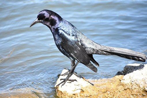 Birds, Water, Lake, Feather, Beak, Fly, Nature, Wing
