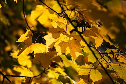 Nature, Abstract, Autumn, Closeup, Color, Day, Fall