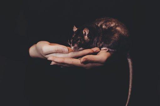 Animals, Adult, Black, Care, Domestic, Female, Fur