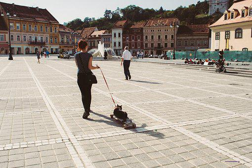 Animals, City, Architecture, People, Back, Brasov, Cat