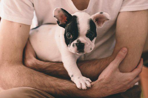 Animals, People, Adorable, Arms, Beautiful, Breed