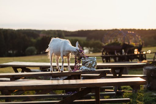 Animals, Nature, Agriculture, Baby, Bench, Bouquet