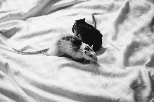 Animals, Adult, Alergy, Bed, Black, Care, Cute