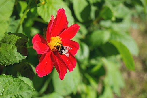 Nature, Bee, Bumblebee, Flora, Flower, Garden, Green
