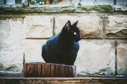Animals, Black, Black Sea, Bulgaria, Cat, Pomorie