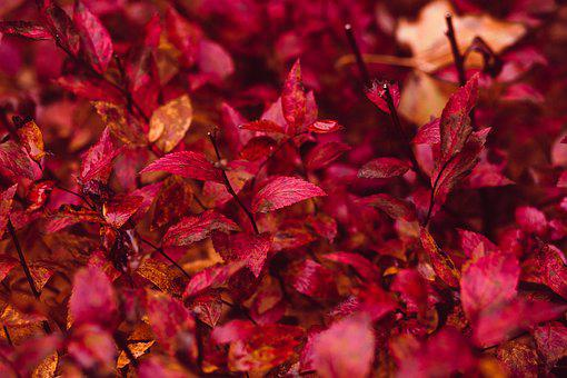 Nature, Abstract, Autumn, Background, Bush, Closeup