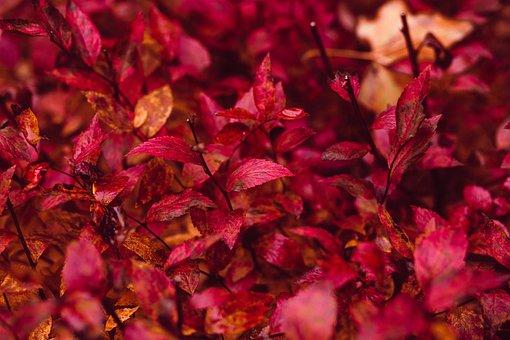 Nature, Abstract, Autumn, Background, Bush, Closeup