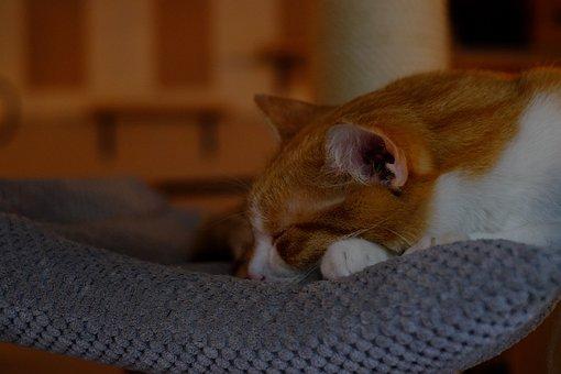 Animals, Adorable, Bed, Cat, Closeup, Comfort