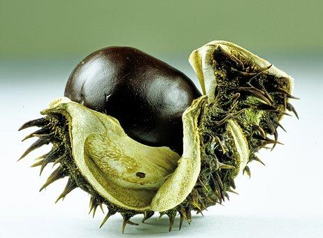 Chestnut, Close, Nature, Autumn Fruit, Autumn