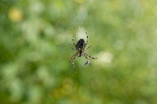 Spider, Cobweb, Nature, Close, Network, Arachnid
