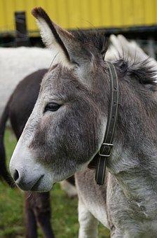 Donkey, Animal, Beast Of Burden, Meadow, Ears, Creature