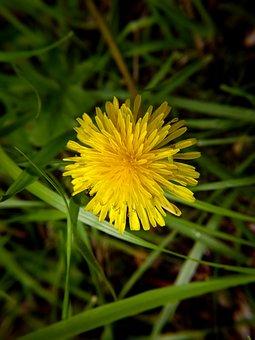 Flower, Nature, Yellow, Beauty, Flowers, Garden