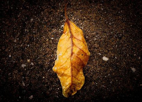 Leaf, Nature, Fallen Leaves, Foliage, Dry Leaf