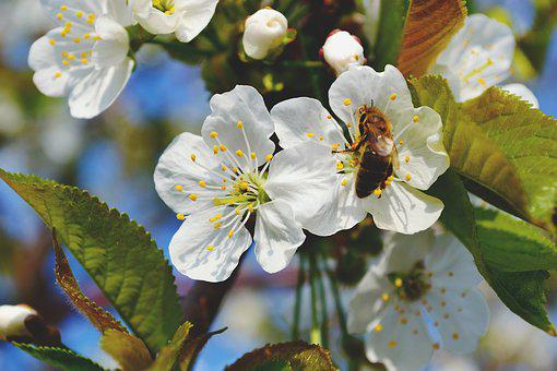 Nature, Bee, Flower, Fruit, Honey, Masuria, Summer