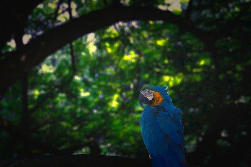 Parrot, Jungle, Blue, Green, Dark
