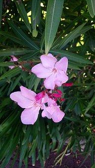 Flower, Nature, Madeira