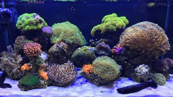 Aquarium, Marine, Coral