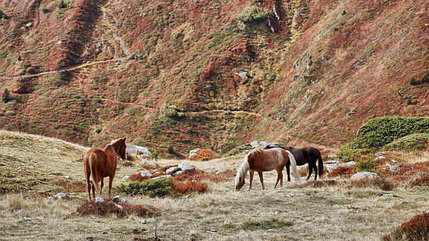 Horses, Graze, Meadow, Nature, Eat, Group, Mammal