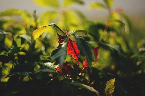 Nature, Autumn, Background, Begin, Begins, Blurred