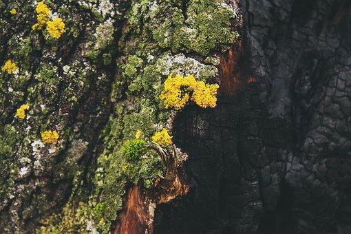 Nature, Ash, Bark, Burn, Burnt, Charcoal, Closeup, Moss