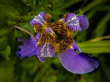 Flowers, Nature, Beauty, Garden, Lilac, Decoration