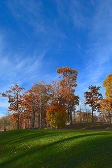 Landscape, Trees, Nature, Grass, Green, Foliage, Yellow