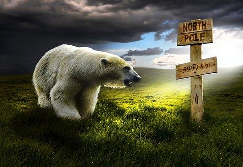 Polar Bear, White, Landscape, Arctic, Bear, Polar