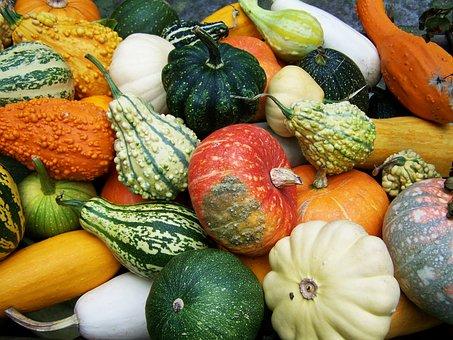 Pumpkins, Colorful Pumpkins, Fall Harvest