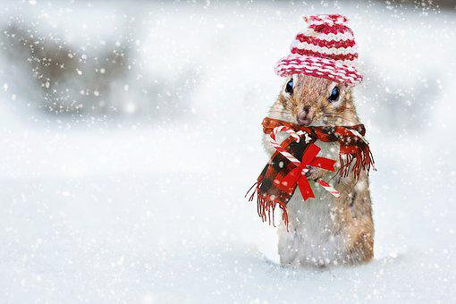 Winter, Chipmunk, Knit Hat, Red, Scarf, Bundled Up