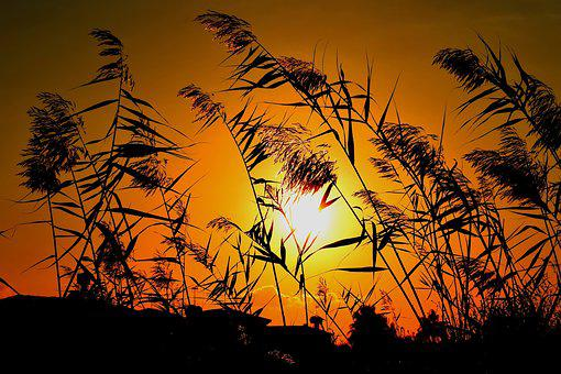 Reeds, Sun, Sunset, Nature, Silhouettes, Shadows, Dusk
