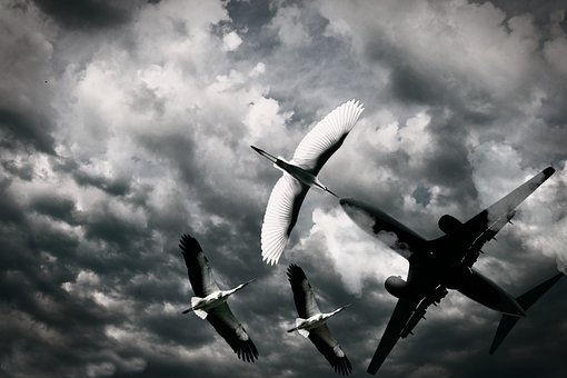 Bird, Aeroplane, Sky, Flying, Wings