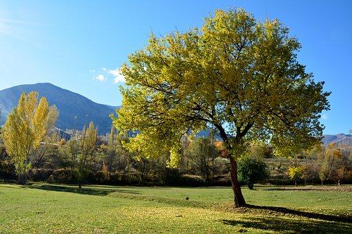 Autumn, Season, Nature, Background, Beautiful, Outdoor