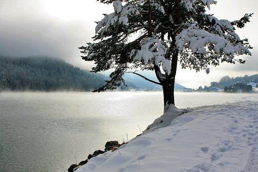 Snow, Tree, Coniferous, Lake, Mountains, Panorama, Glow