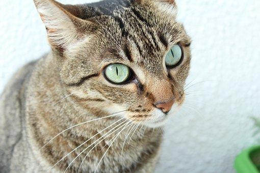 Look, Gata, Love, Cat Face, Eyes, Feline, Kitten