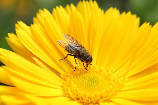 Fly, Flower, Nature, Insect, Blossom, Bloom, Macro