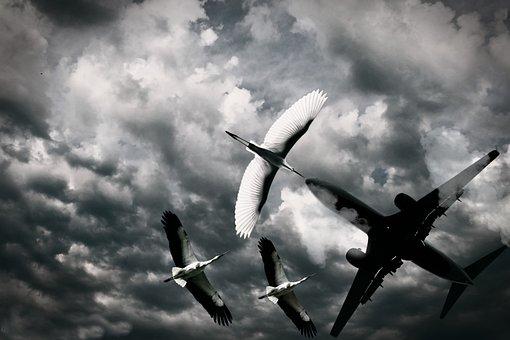 Bird, Aeroplane, Sky, Flying, Wings