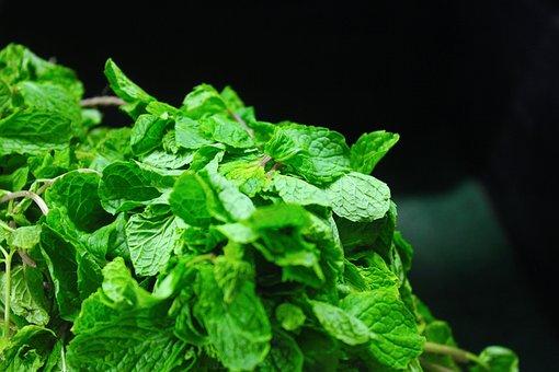 Mint Leaves, Mint, Fresh, Vegetables, Ingredient, Plant