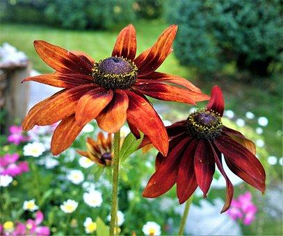 Flower, Garden, Summer, Flowering, Flora, Garden Orange