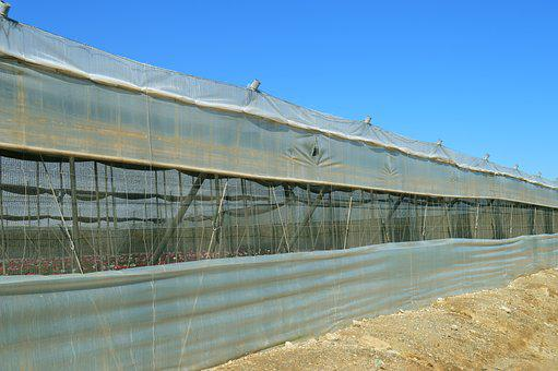 Greenhouse, Cultivation, Plastic
