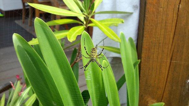 Insect, Spin, Network, Close, Animals, Cobweb