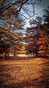 Autumn, Landscape, Leaves, Wallpapers, Nature