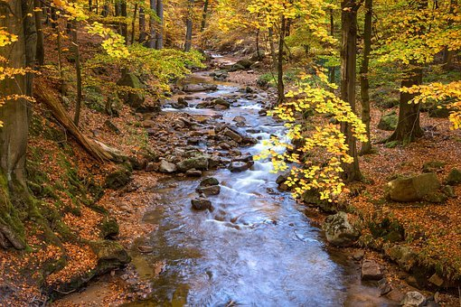 Fall Foliage, Ilse, Long Exposure, Autumn, Mood, Nature
