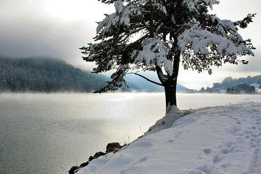 Snow, Tree, Coniferous, Lake, Mountains, Panorama, Glow